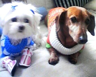 Abby and Chili (Royal Dogs)
